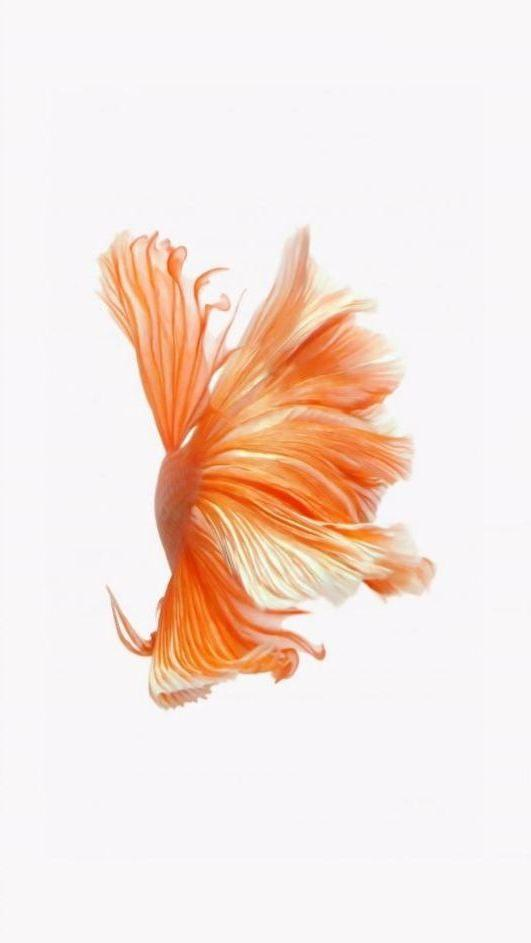 живые обои рыбки Айфон