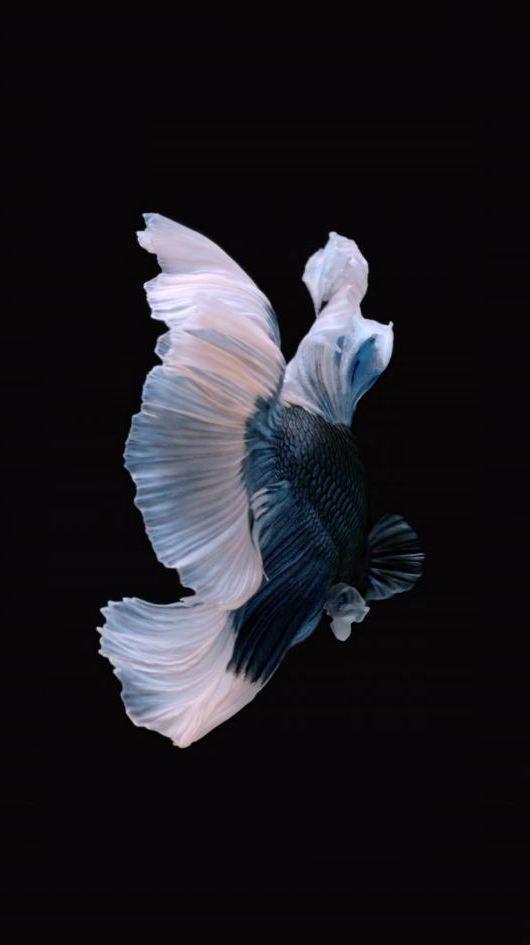 обои рыбки на Айфон