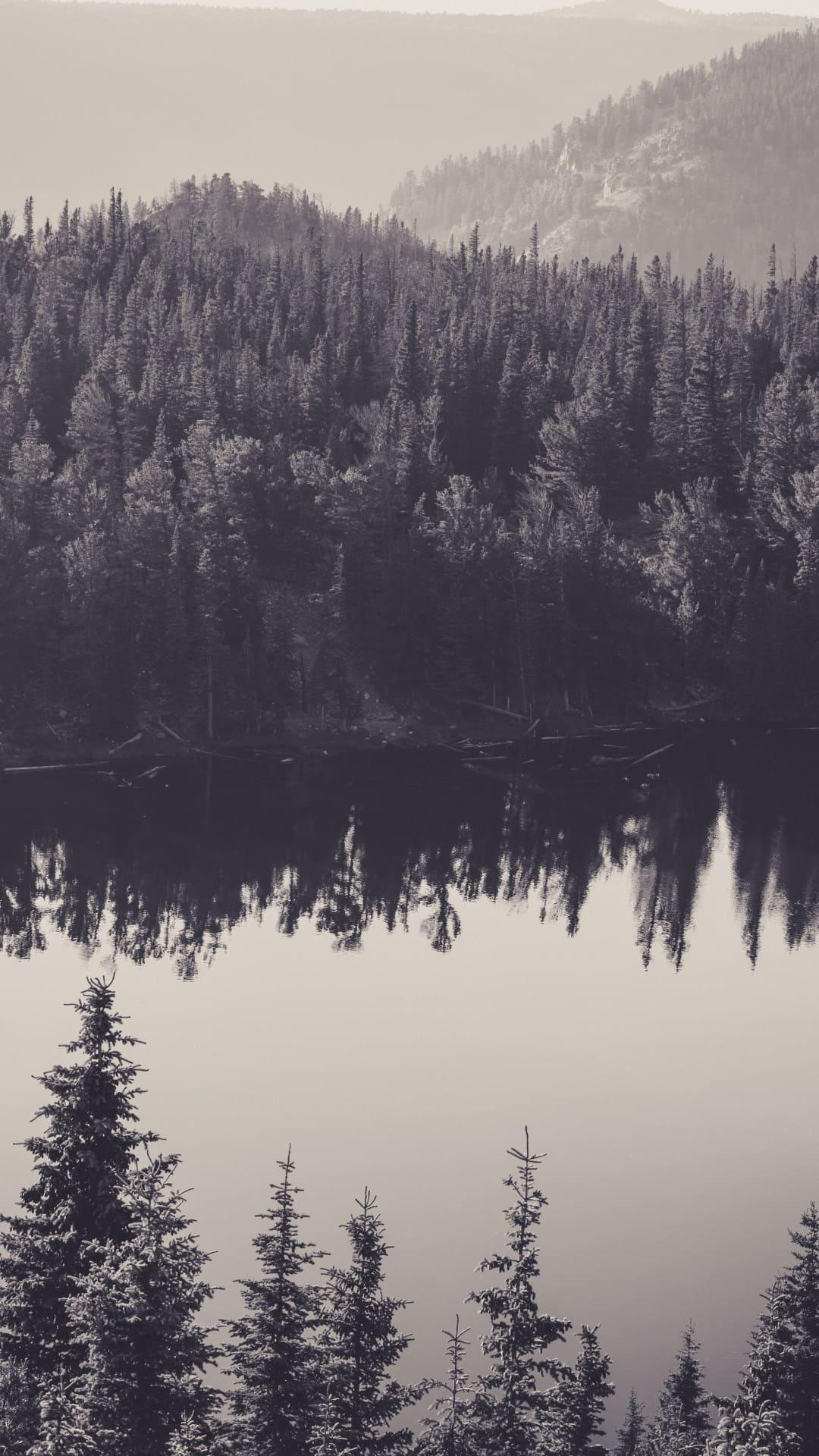 обои на айфон 6 лес