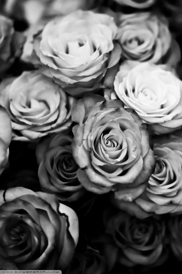 обои на айфон 5 s цветы