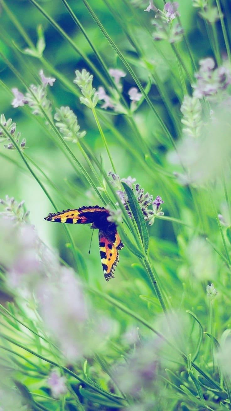 заставка на айфон бабочки