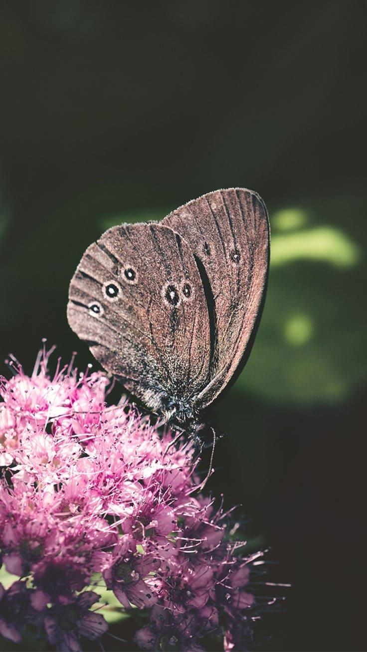 обои на айфон бабочки