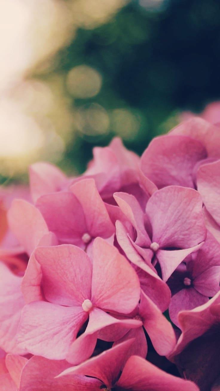 цветы обои на айфон 5s