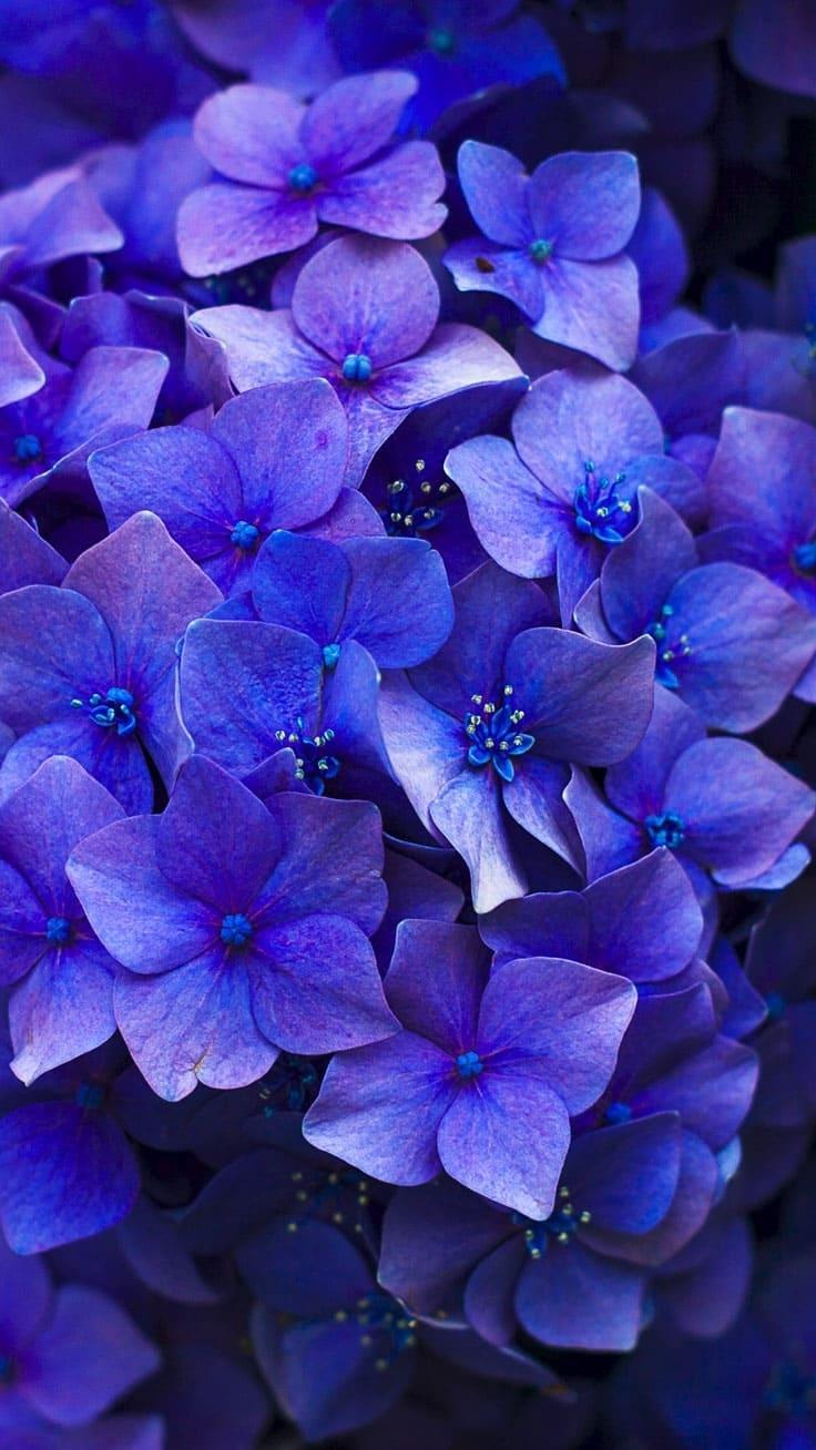 обои на айфон hd цветы