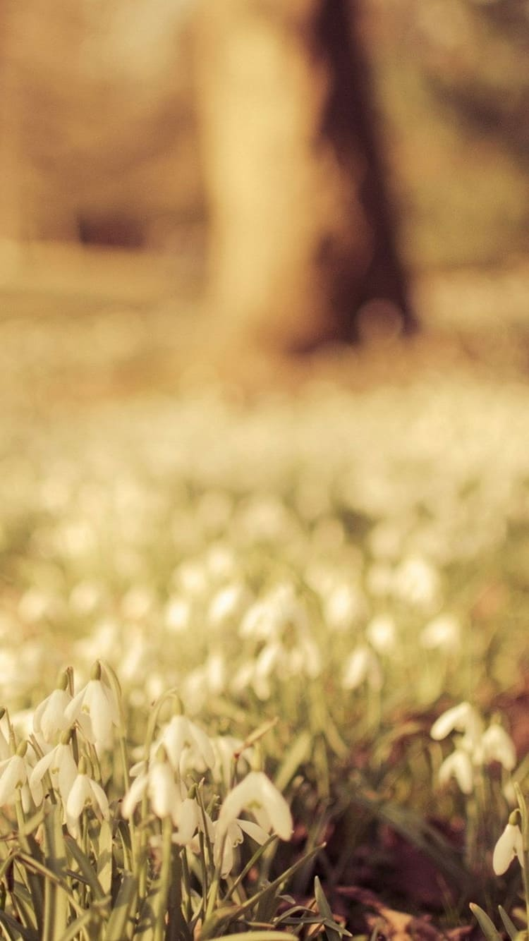 цветы на айфон