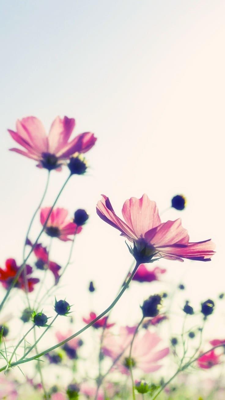 обои на телефон айфон цветы