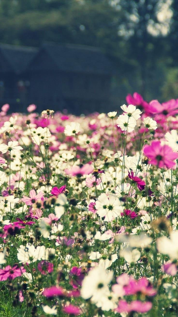 обои на айфон 5 цветы