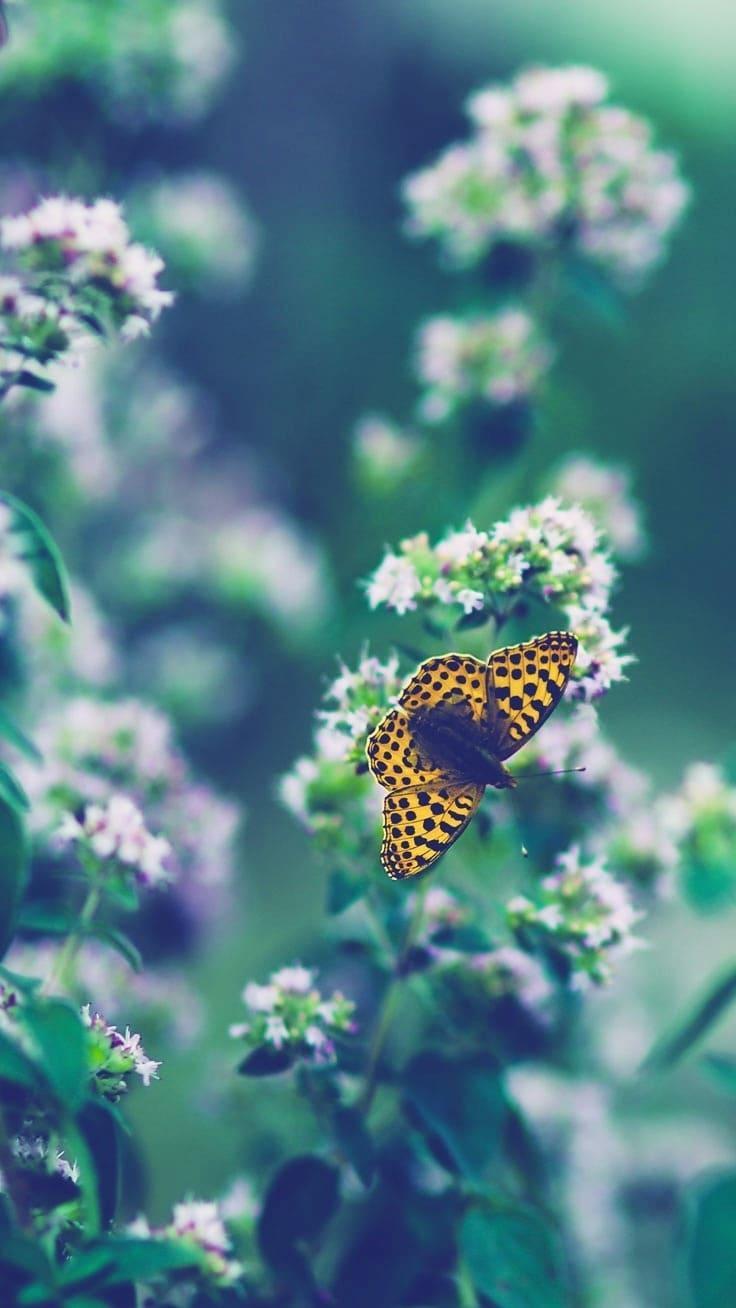 картинки на обои айфон бабочки