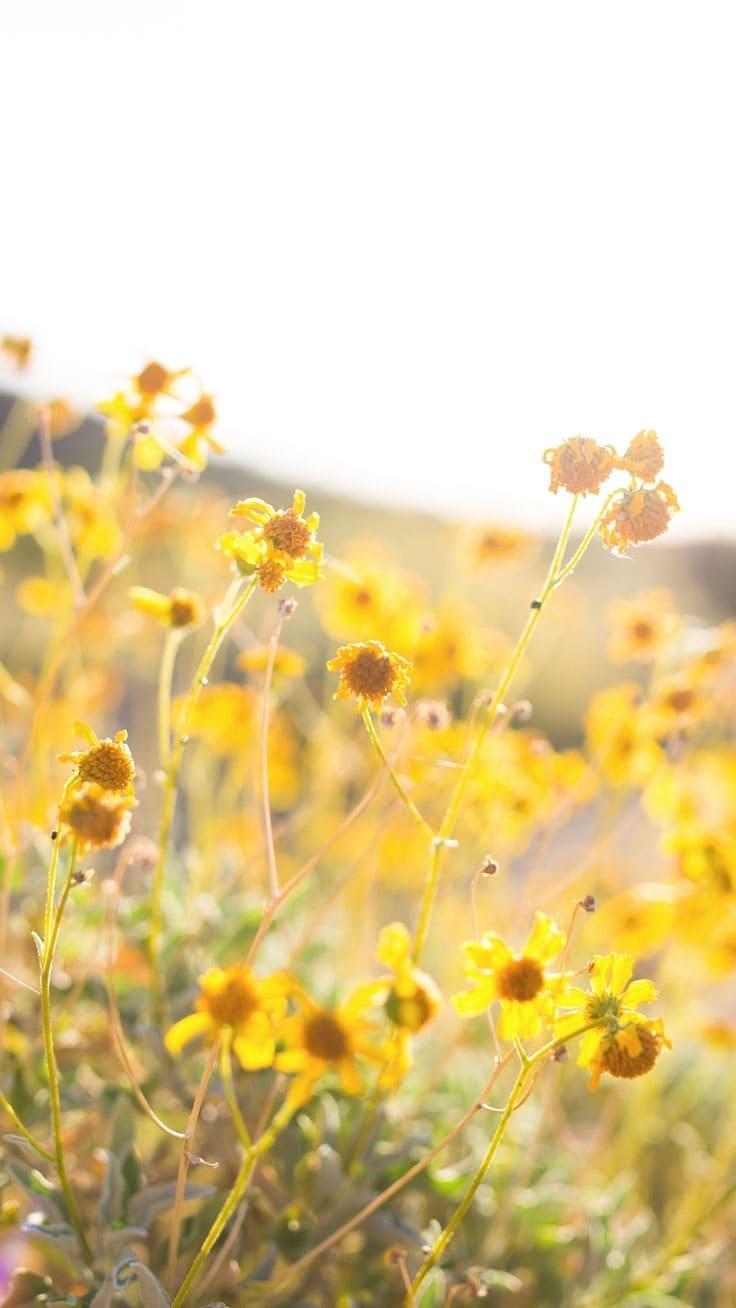 красивые обои на айфон цветы