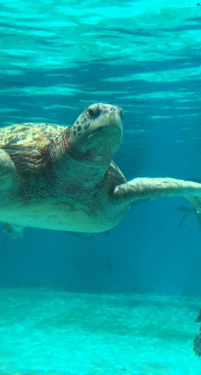 обои на айфон черепаха