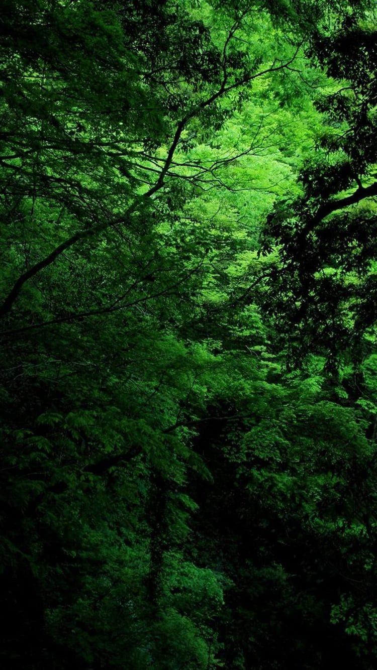 обои на айфон природа лес